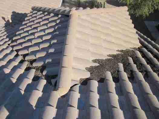Roof Medics - Tile Roof Bird Poop
